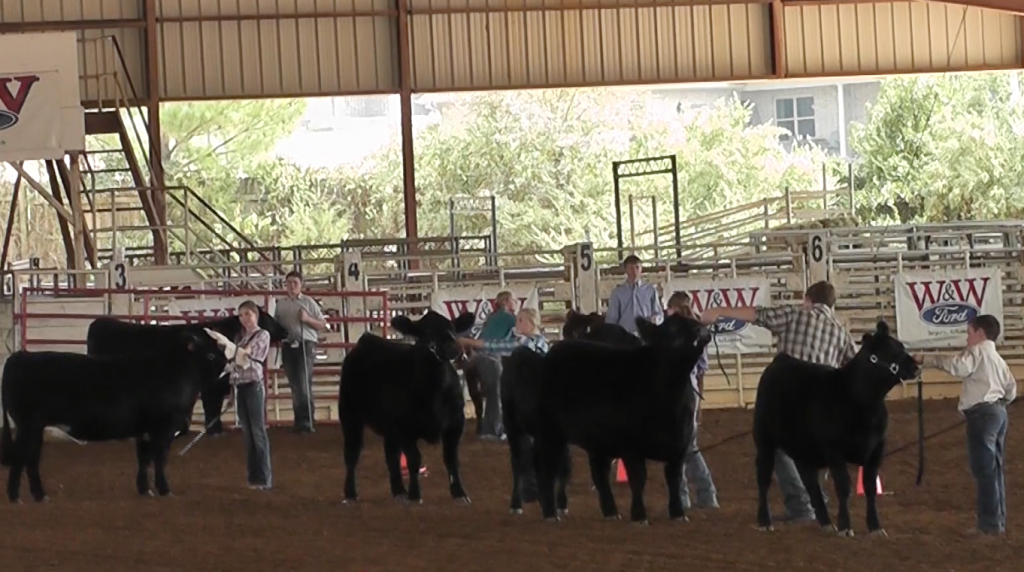 FFA participates in fair day with numerous farming activities